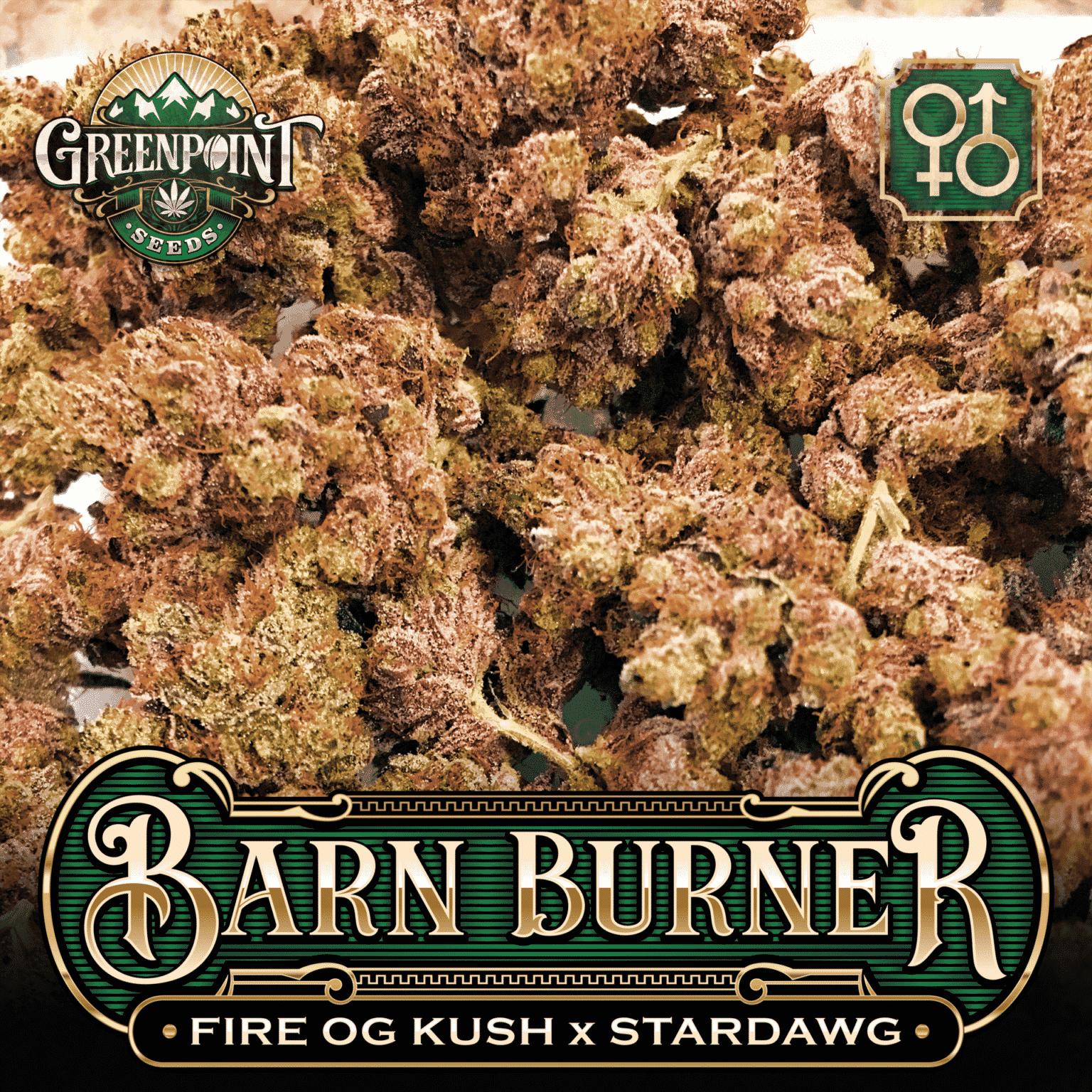 Fire OG Kush x Stardawg Seeds | Barn Burner Cannabis Seeds - US Seed Bank