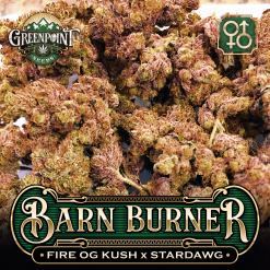 Fire OG Kush x Stardawg Seeds | Barn Burner Cannabis Seeds - US Seed Bank