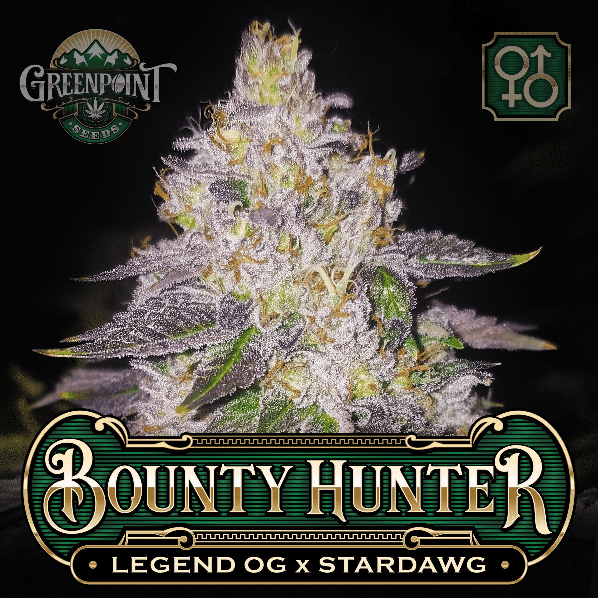 Bounty Hunter Seeds - Legend OG x Stardawg Strain   Greenpoint Seeds