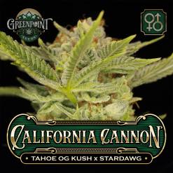 Tahoe OG Kush x Stardawg Seeds | California Cannon Cannabis Seeds - US Seed Bank