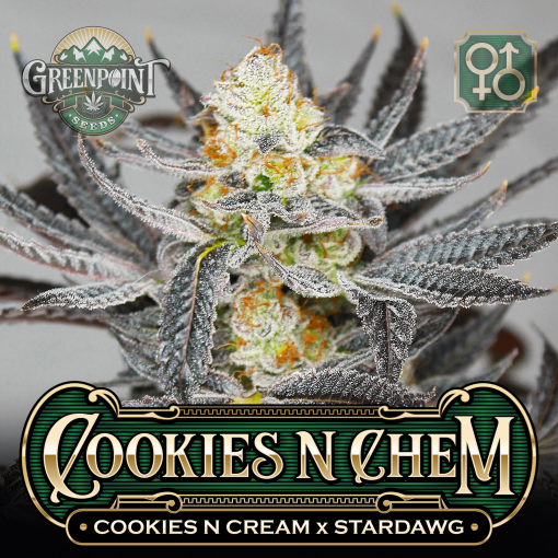 Cookies N' Cream x Stardawg Seeds | Cookies N Chem Cannabis Seeds - Seed Bank USA
