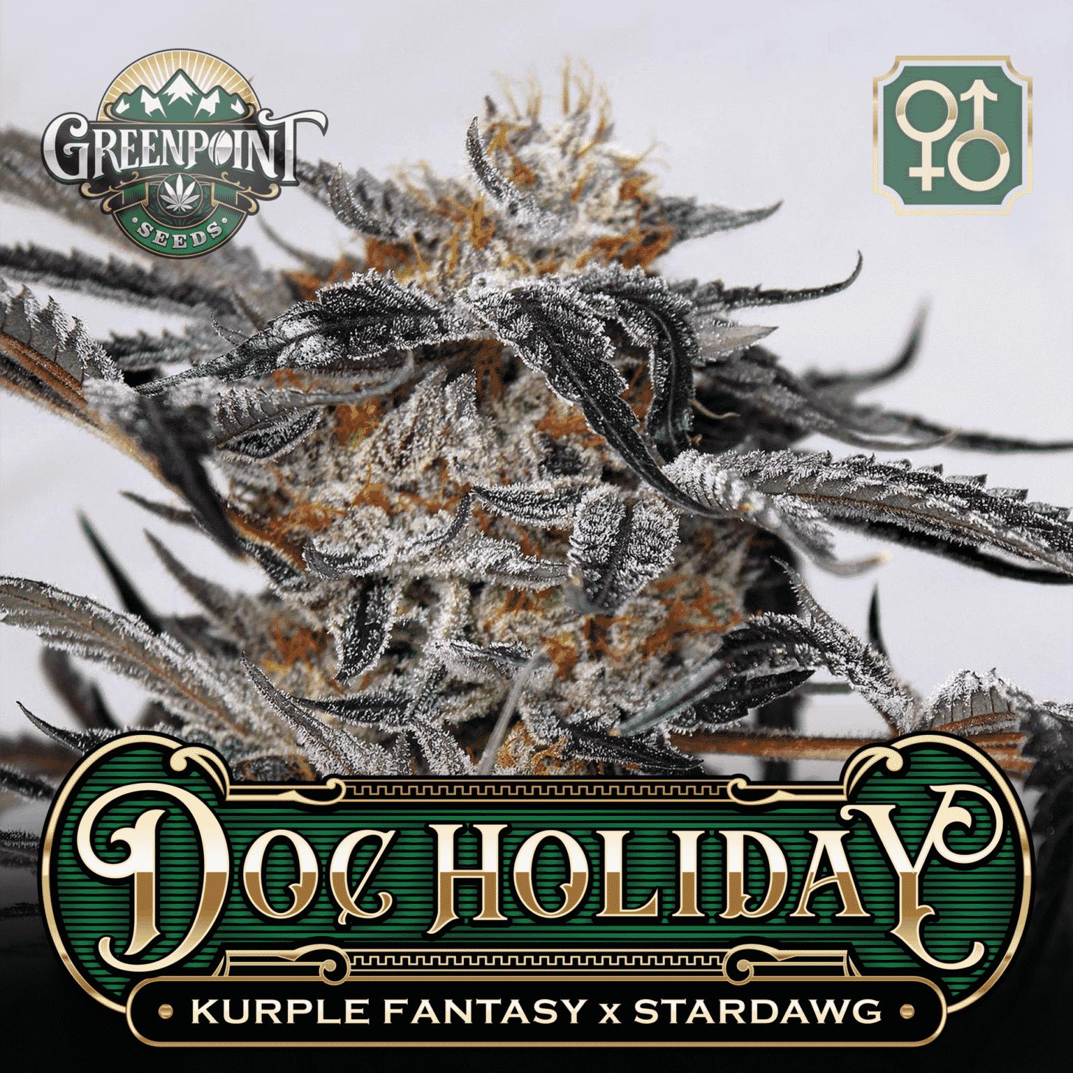 Kurple Fantasy x Stardawg Seeds | Doc Holiday Cannabis Seeds - US Seed Bank