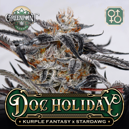 Kurple Fantasy x Stardawg Seeds | Doc Holiday Cannabis Seeds - US Seed Bank