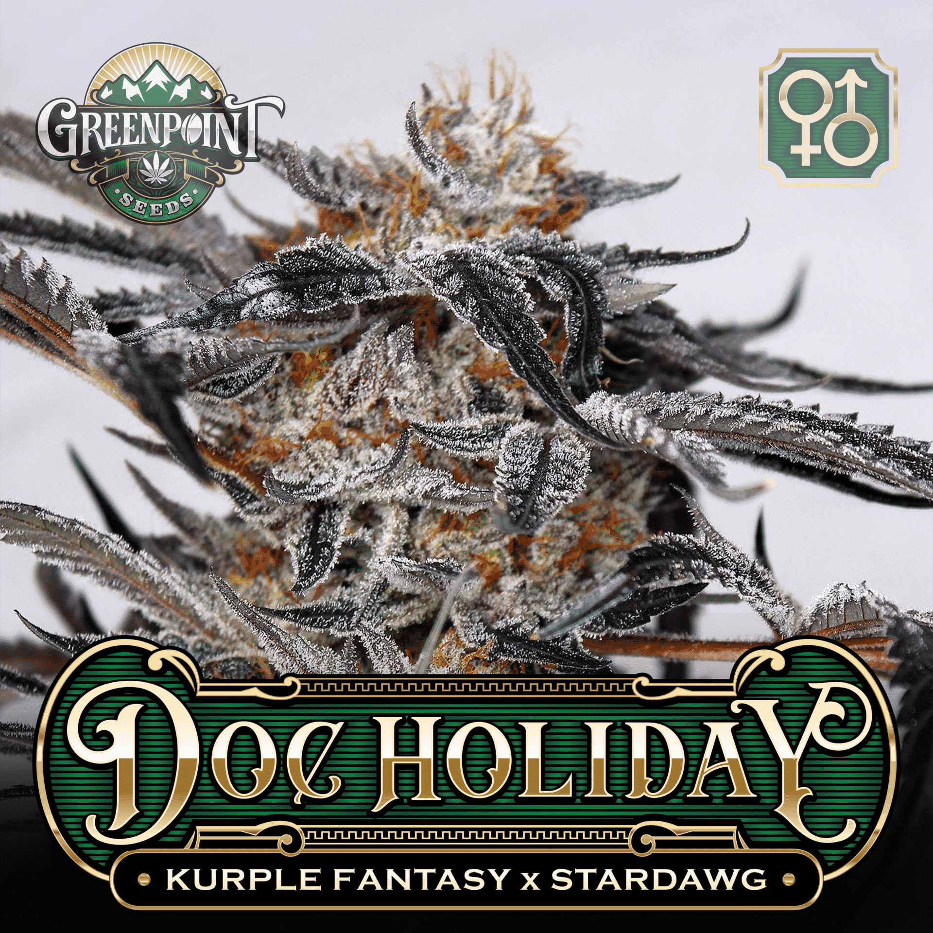 Doc Holiday Seeds - Kurple Fantasy x Stardawg | Greenpoint Seeds