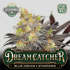 Blue Dream x Stardawg Seeds | Dreamcatcher Cannabis Seeds