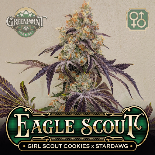 Girl Scout Cookies (GSC) x Stardawg Seeds - Eagle Scout Cannabis Seeds - US Seed Bank