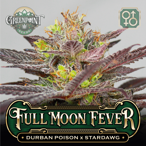 Durban Poison x Stardawg Seeds - Full Moon Fever Cannabis Seeds - US Seed Bank