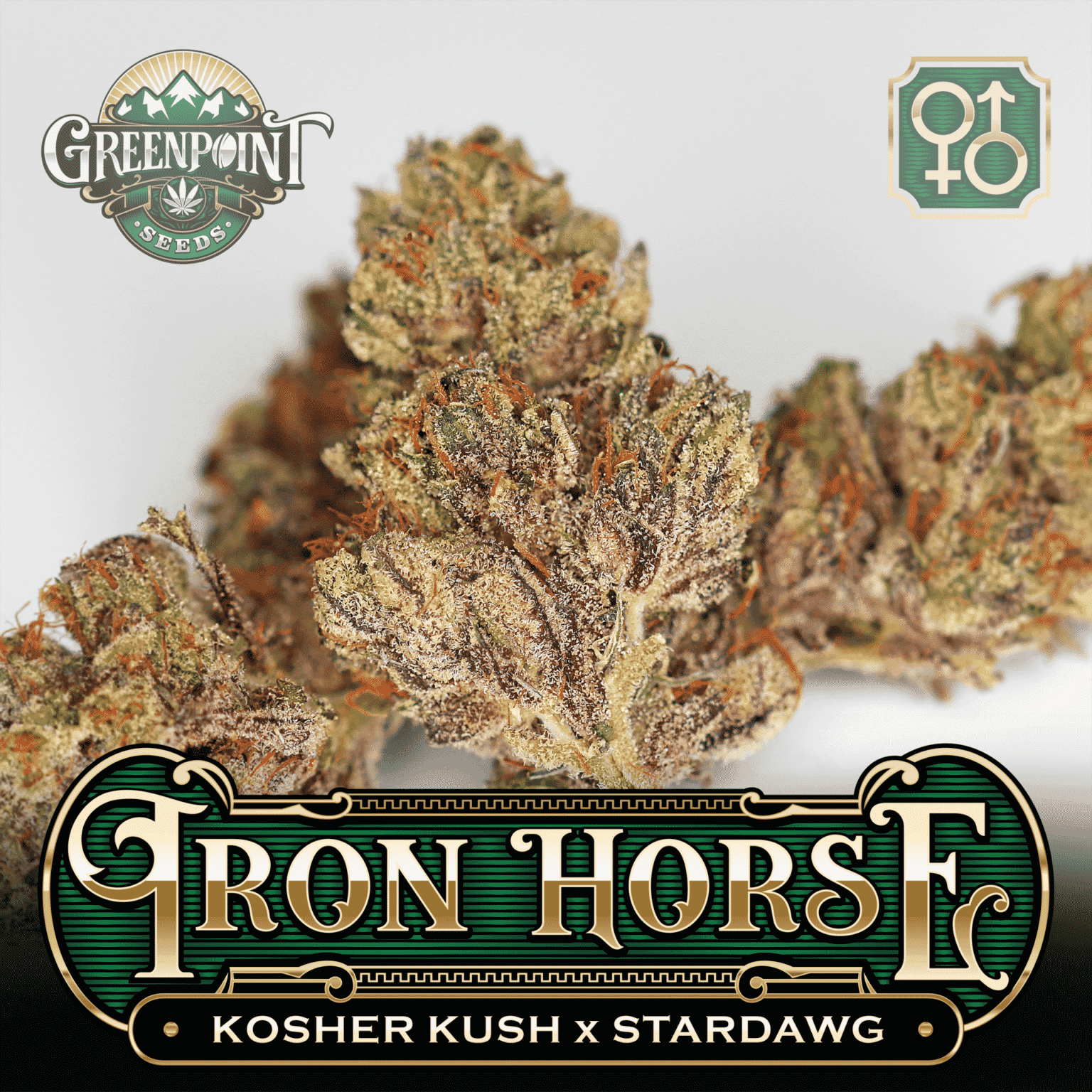 Kosher Kush x Stardawg Seeds - Iron Horse Cannabis Seeds - US Seed Bank