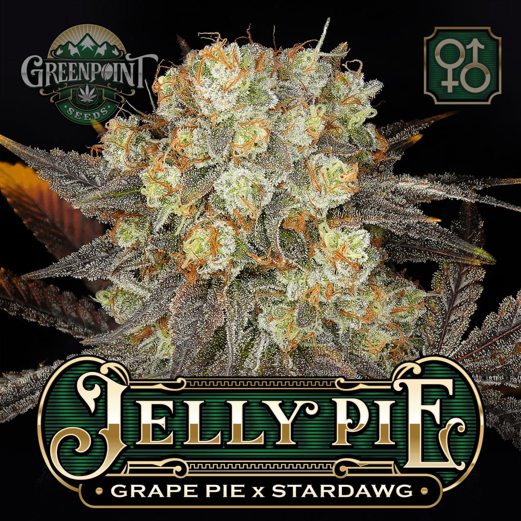 Grape Pie x Stardawg Seeds | Jelly Pie Cannabis Seeds