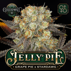 Grape Pie x Stardawg Seeds | Jelly Pie Cannabis Seeds