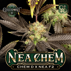 Chem D x Nea F2 Seeds - Nea Chem Cannabis Seeds - US Seed Bank