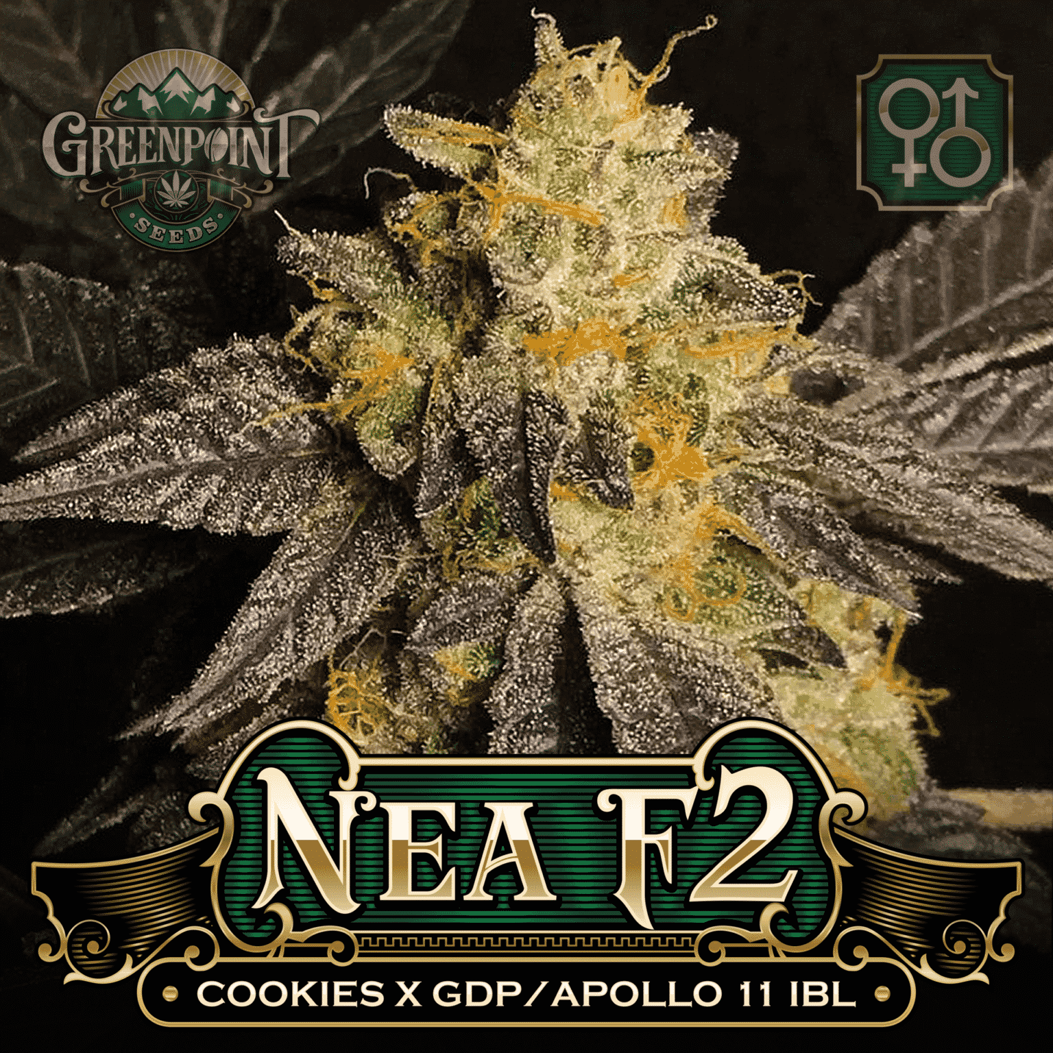 Cookies x (Granddaddy Purple x Apollo 11 IBL) Seeds - Nea F2 Cannabis Seeds
