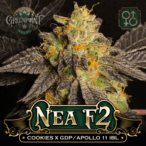 Cookies x (Granddaddy Purple x Apollo 11 IBL) Seeds - Nea F2 Cannabis Seeds