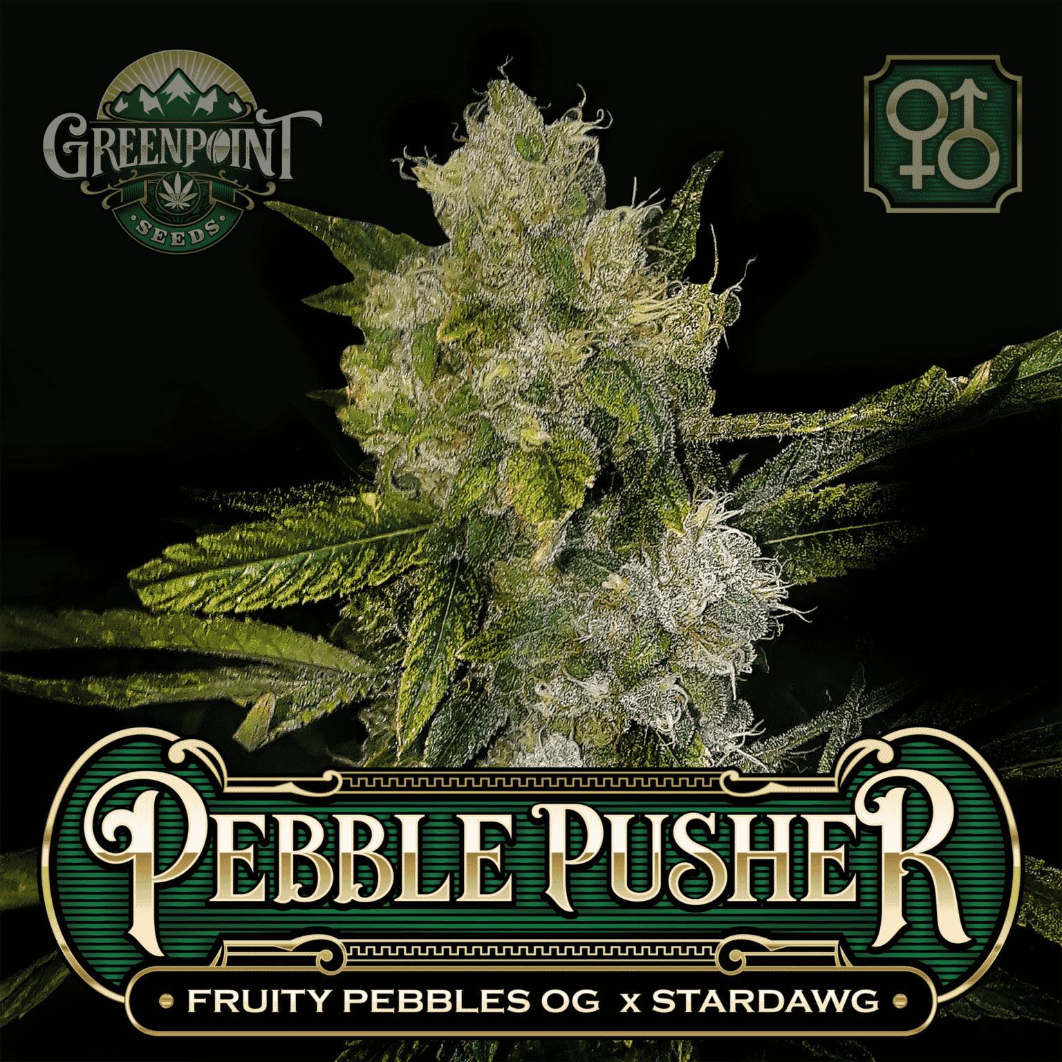FPOG (Fruity Pebbles OG) x Stardawg Seeds | Pebble Pusher Cannabis Seeds