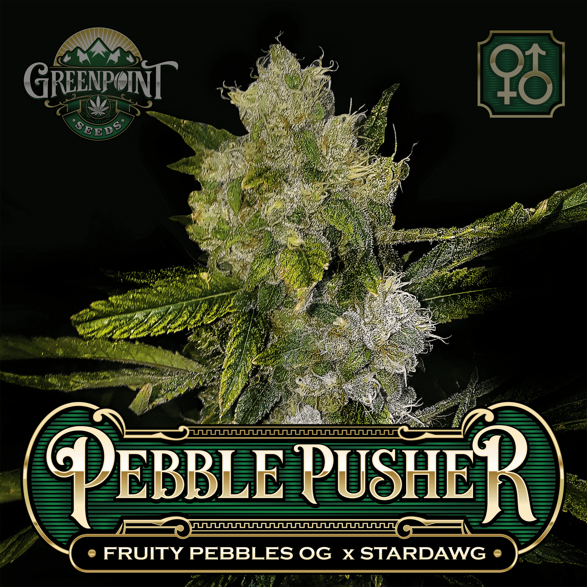 Pebble Pusher - Fruity Pebbles Cannabis Strain | Greenpoint Seeds