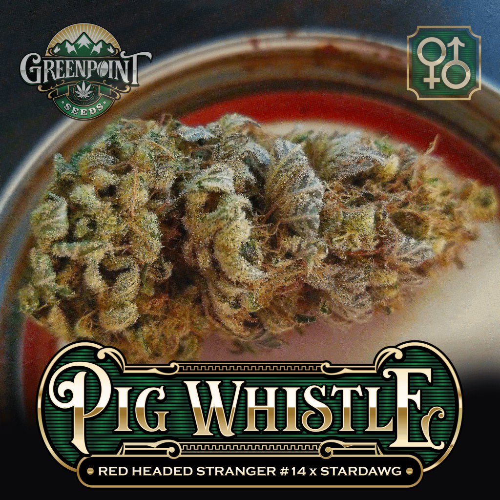 Red Headed Stranger #14 x Stardawg Seeds - Pig Whistle Cannabis Seeds - US Seed Bank