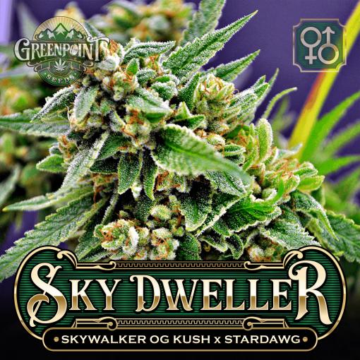 Skywalker OG Kush X Stardawg Seeds | Sky Dweller Cannabis Seeds
