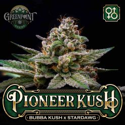 Pioneer Kush
