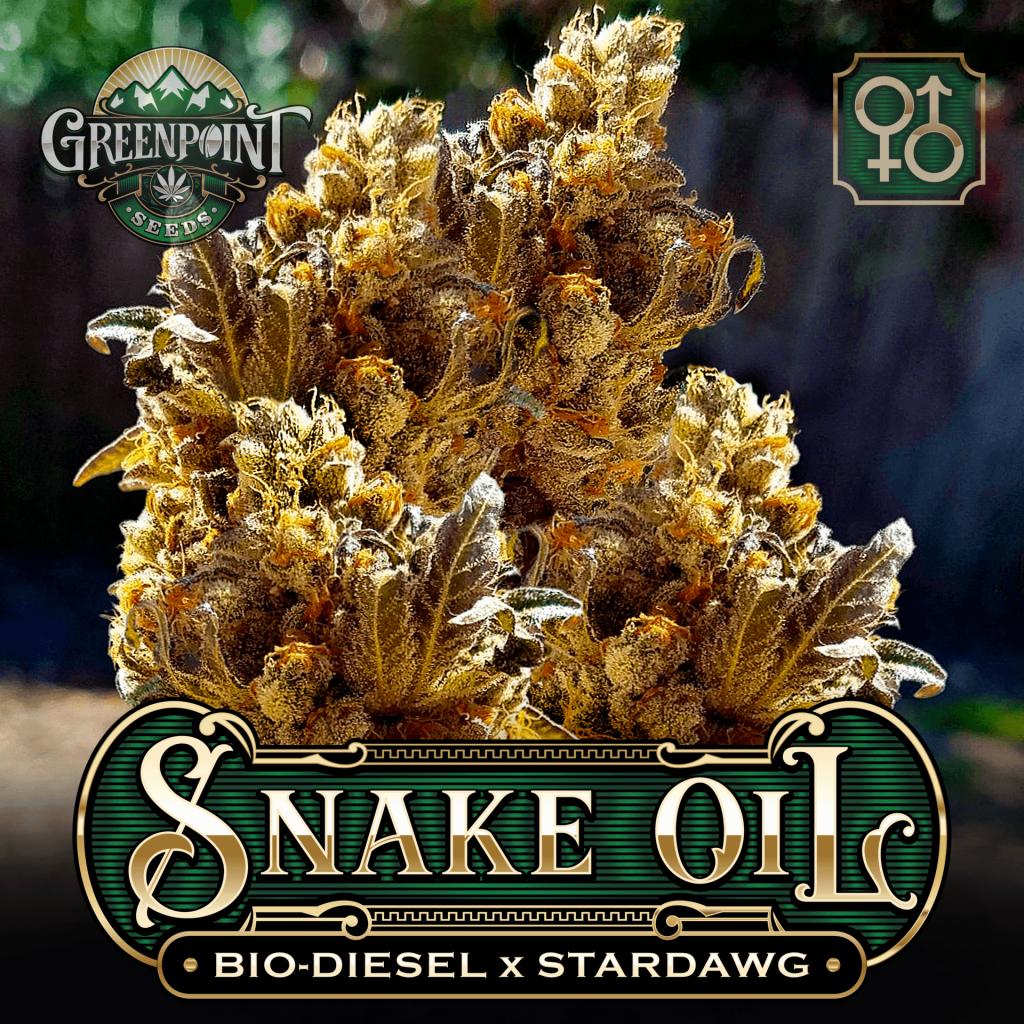 Bio Diesel x Stardawg Seeds | Snake Oil Cannabis Seeds