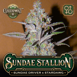 Sundae Driver x Stardawg Seeds - Sundae Driver Cannabis Seeds - US Seed Bank