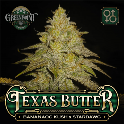 Banana OG Kush x Stardawg Seeds | Texas Butter Cannabis Seeds