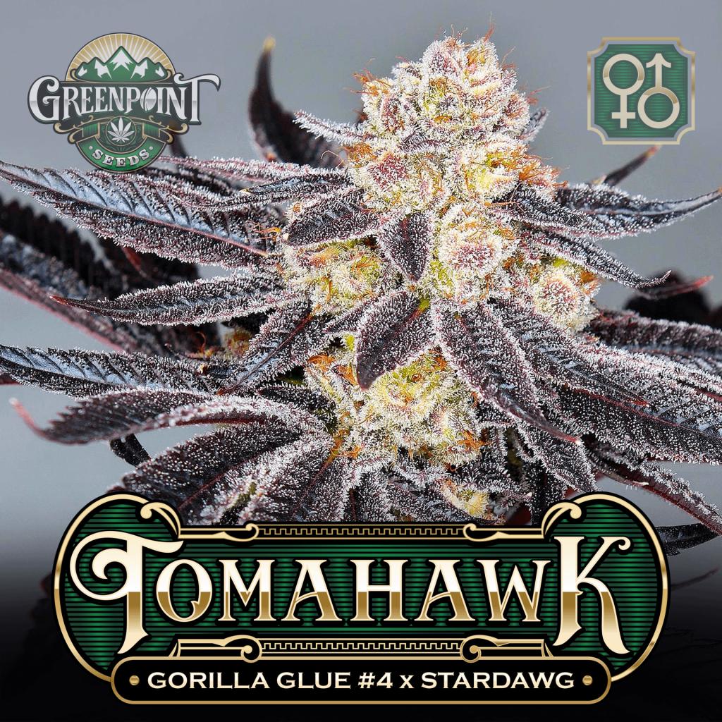 GG4 (Gorilla Glue #4) x Stardawg Seeds   Tomahawk Cannabis Seeds
