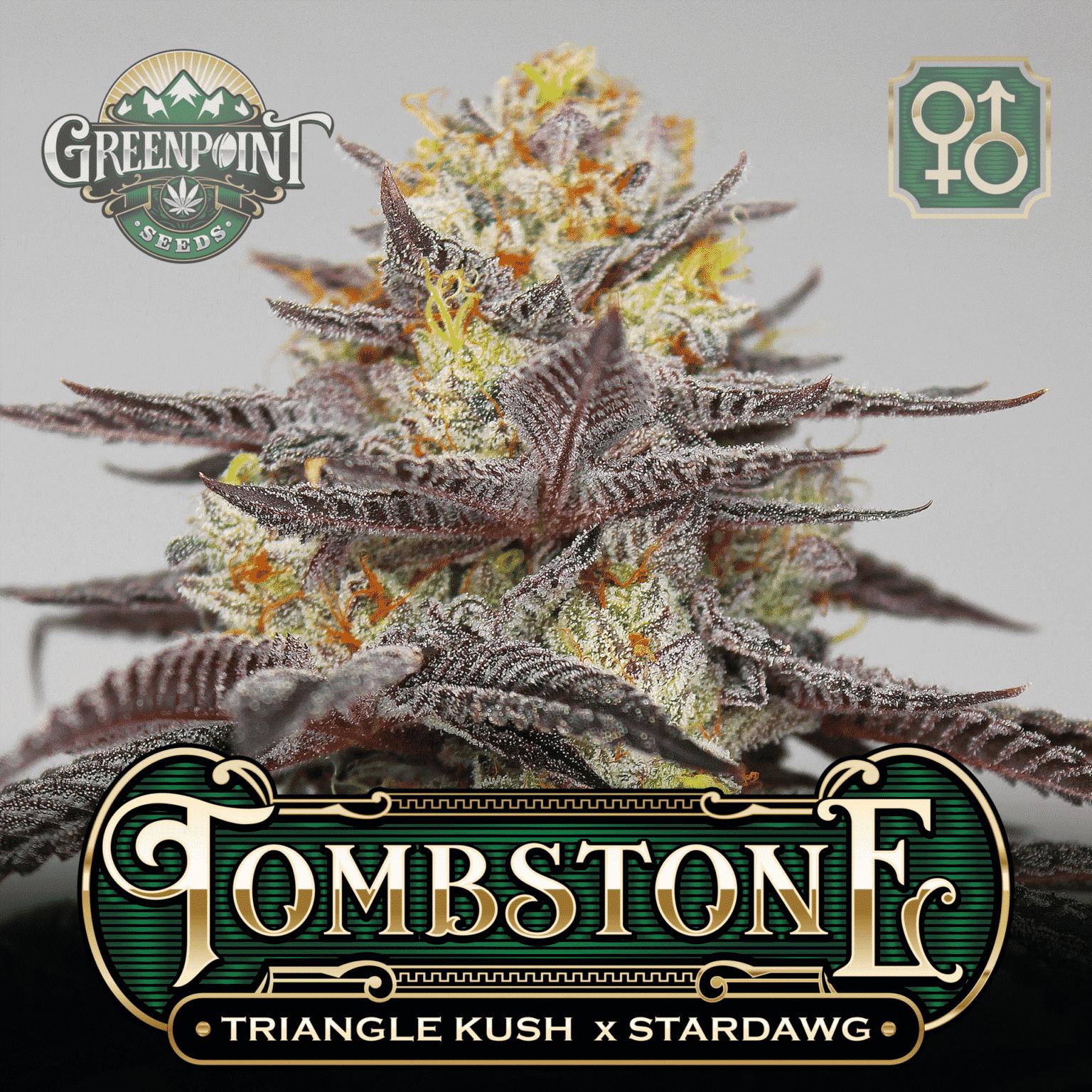 Triangle Kush x Stardawg Seeds   Tombstone Cannabis Seeds - USA Seed Bank