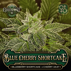 Blueberry Shortcake x Cherry AK-47 Seeds - Blue Cherry Shortcake Cannabis Seeds - Colorado Seed Bank