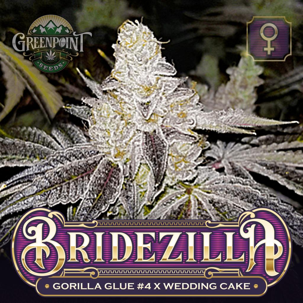 Gorilla Glue #4 x Wedding Cake Seeds - Bridezilla Cannabis Seeds - Colorado Seed Bank