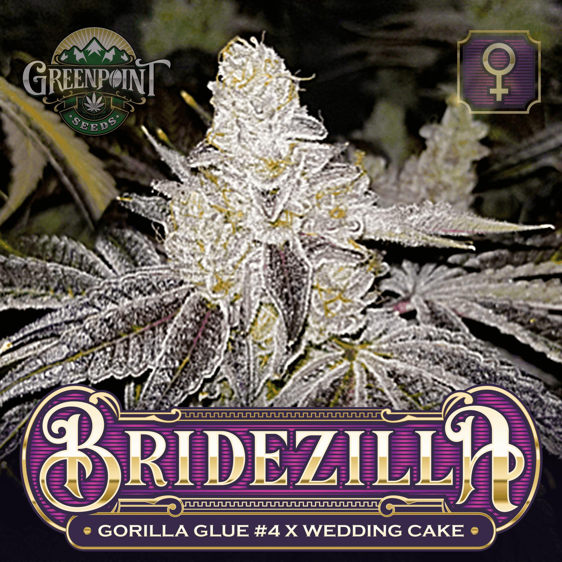Bridezilla Feminized Seeds - GG4 x Wedding Cake   Greenpoint Seeds
