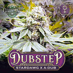 Corey Haim Stardawg x A-Dub Seeds - DubStep Cannabis Seeds - Colorado Seed Bank