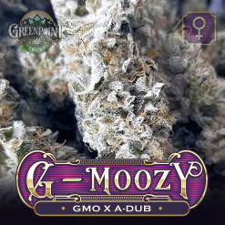 GMO x A-Dub Seeds - G-Moozy Cannabis Seeds - Colorado Seed Bank