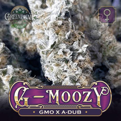GMO x A-Dub Seeds - G-Moozy Cannabis Seeds - Colorado Seed Bank