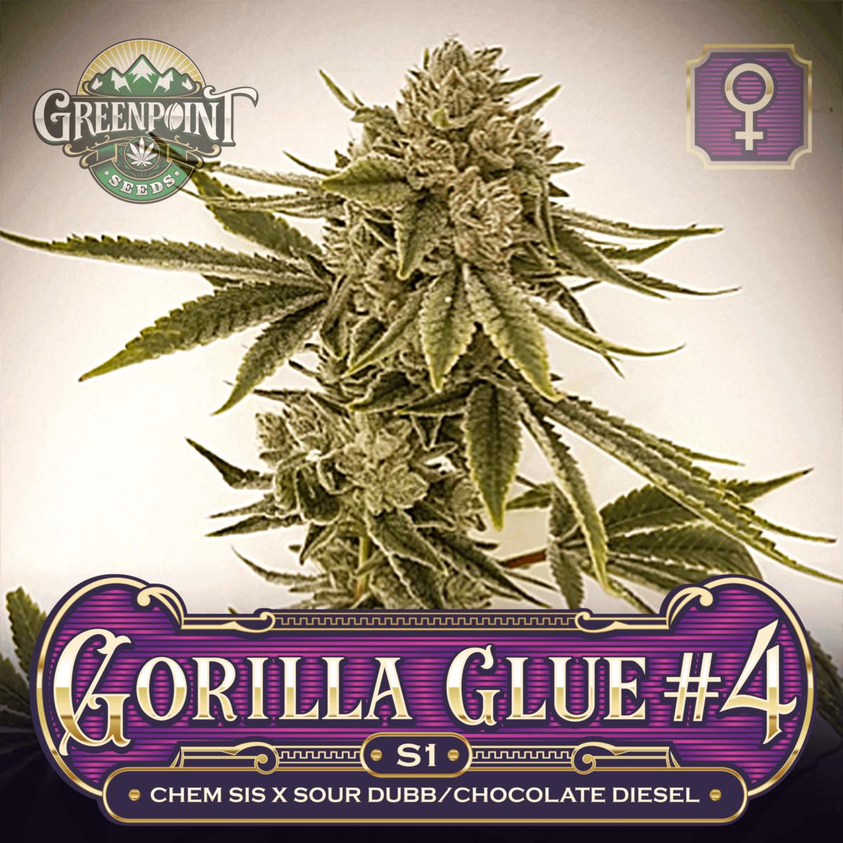 Gorilla Glue #4 x Gorilla Glue #4 Seeds - Gorilla Glue S1 Feminized Cannabis Seeds - US Seed Bank