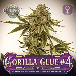 Gorilla Glue #4 x Gorilla Glue #4 Seeds - Gorilla Glue S1 Feminized Cannabis Seeds - US Seed Bank