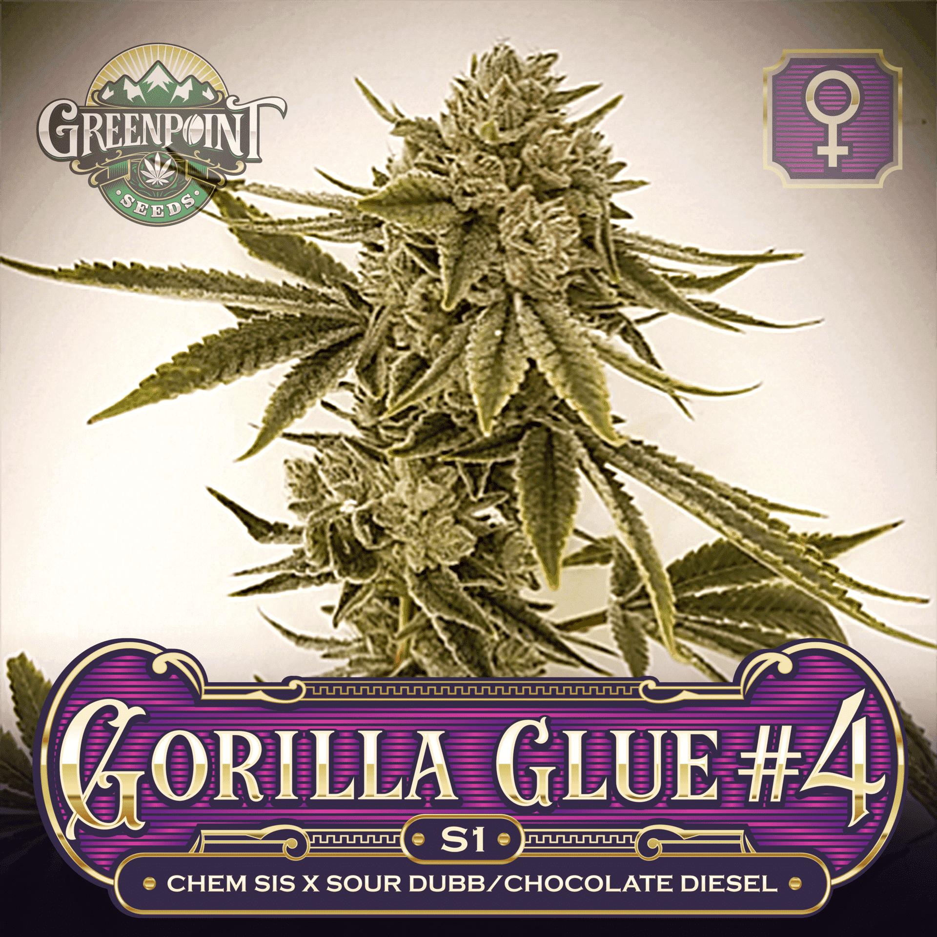 Gorilla Glue #4 S1 Feminized Seeds - GG4 Strain | Greenpoint Seeds