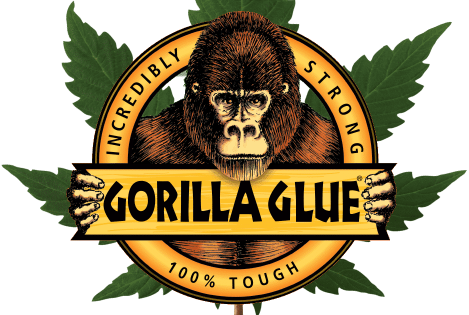 Gorilla Glue #4 S1 Cannabis Seeds