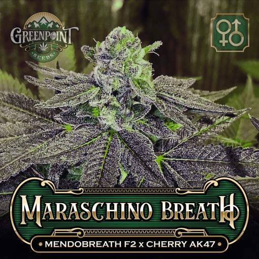 Mendobreath F2 x Cherry AK-47 Seeds - Maraschino Breath v1 - Colorado Seed Bank