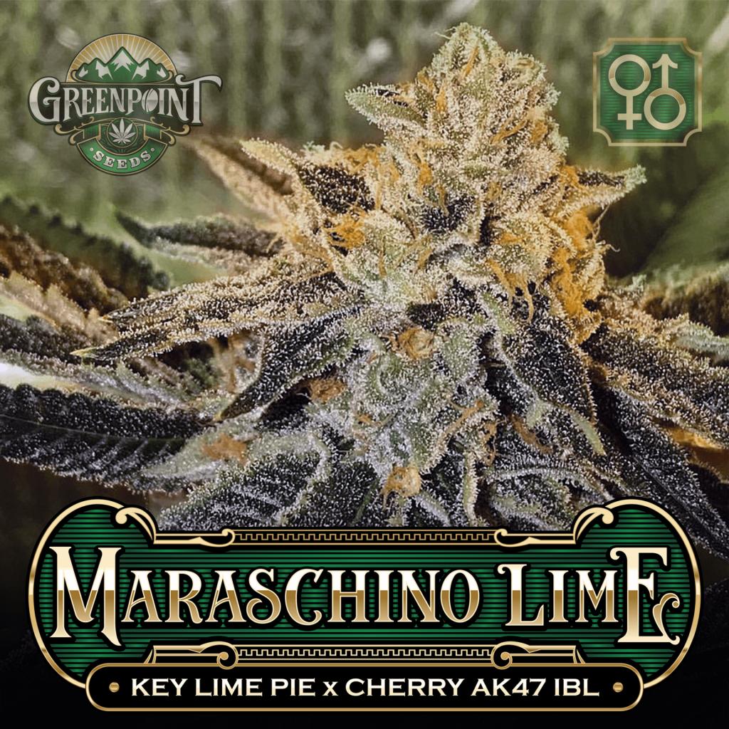 Key Lime Pie x Cherry AK-47 IBL Seeds - Maraschino Lime Cannabis Seeds