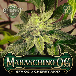SFV OG x Cherry AK-47 Seeds - Maraschino OG Cannabis Seeds - Colorado Seed Bank