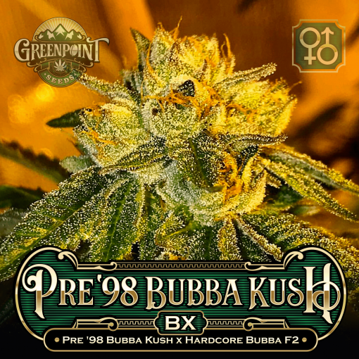 Pre 98 Bubba Kush x Hardcore Bubba F2 Seeds - Pre '98 Bubba Kush Cannabis Seeds - Colorado Seed Bank