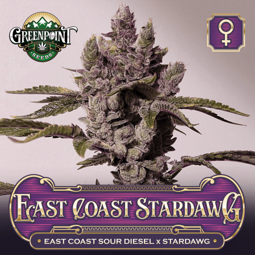 East Coast Sour Diesel x Stardawg Seeds - East Coast Stardawg Cannabis Seeds