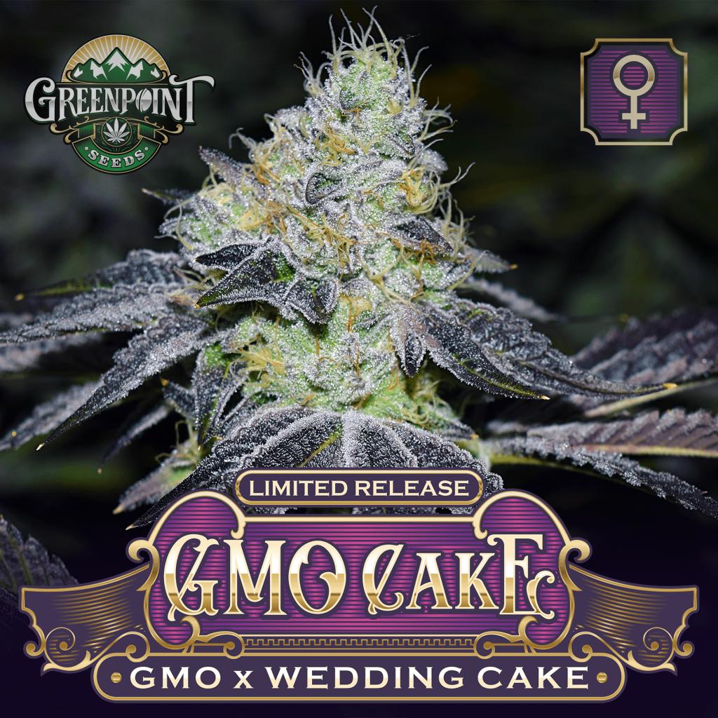 GMO x Wedding Cake Feminized Cannabis Seeds - GMO Cakes Strain - Greenpoint Seeds Colorado