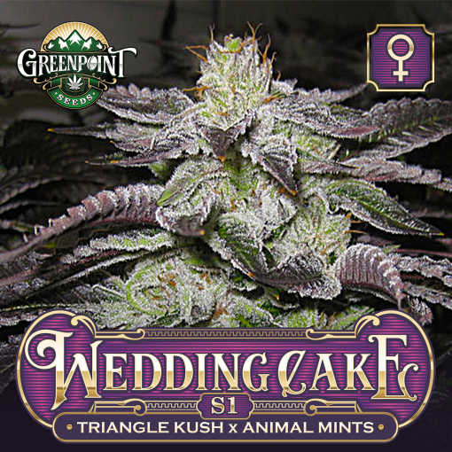 Triangle Kush x Animal Mints Seeds - Wedding Cake Feminized S1 Cannabis Seeds