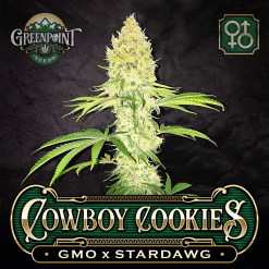 GMO x Stardawg Cannabis Seeds - Raindance Seeds - Greenpoint Seeds Colorado