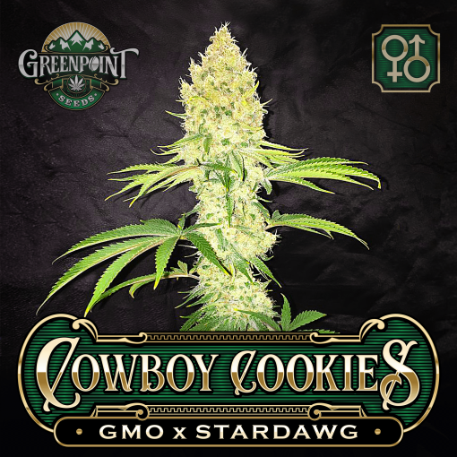 GMO x Stardawg Cannabis Seeds - Raindance Seeds - Greenpoint Seeds Colorado