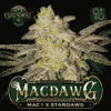 Mac 1 x Stardawg Cannabis Seeds - MacDAWG Seeds | Greenpoint Seeds Colorado Seed Bank