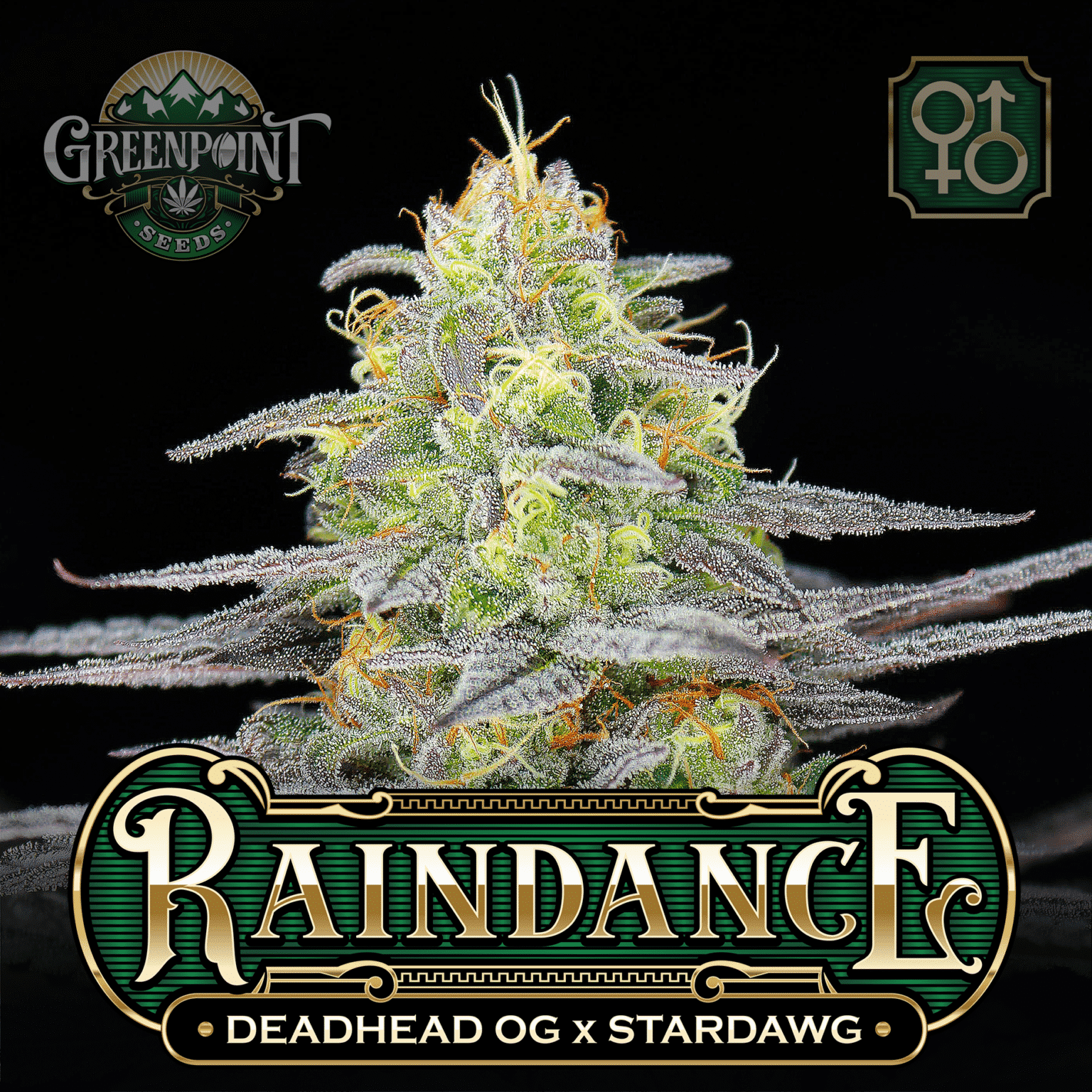 Deadhead OG x Stardawg Cannabis Seeds - Raindance Seeds - Greenpoint Seeds USA