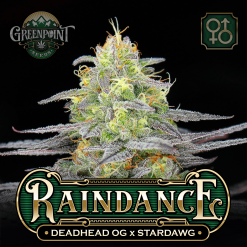Deadhead OG x Stardawg Cannabis Seeds - Raindance Seeds - Greenpoint Seeds USA