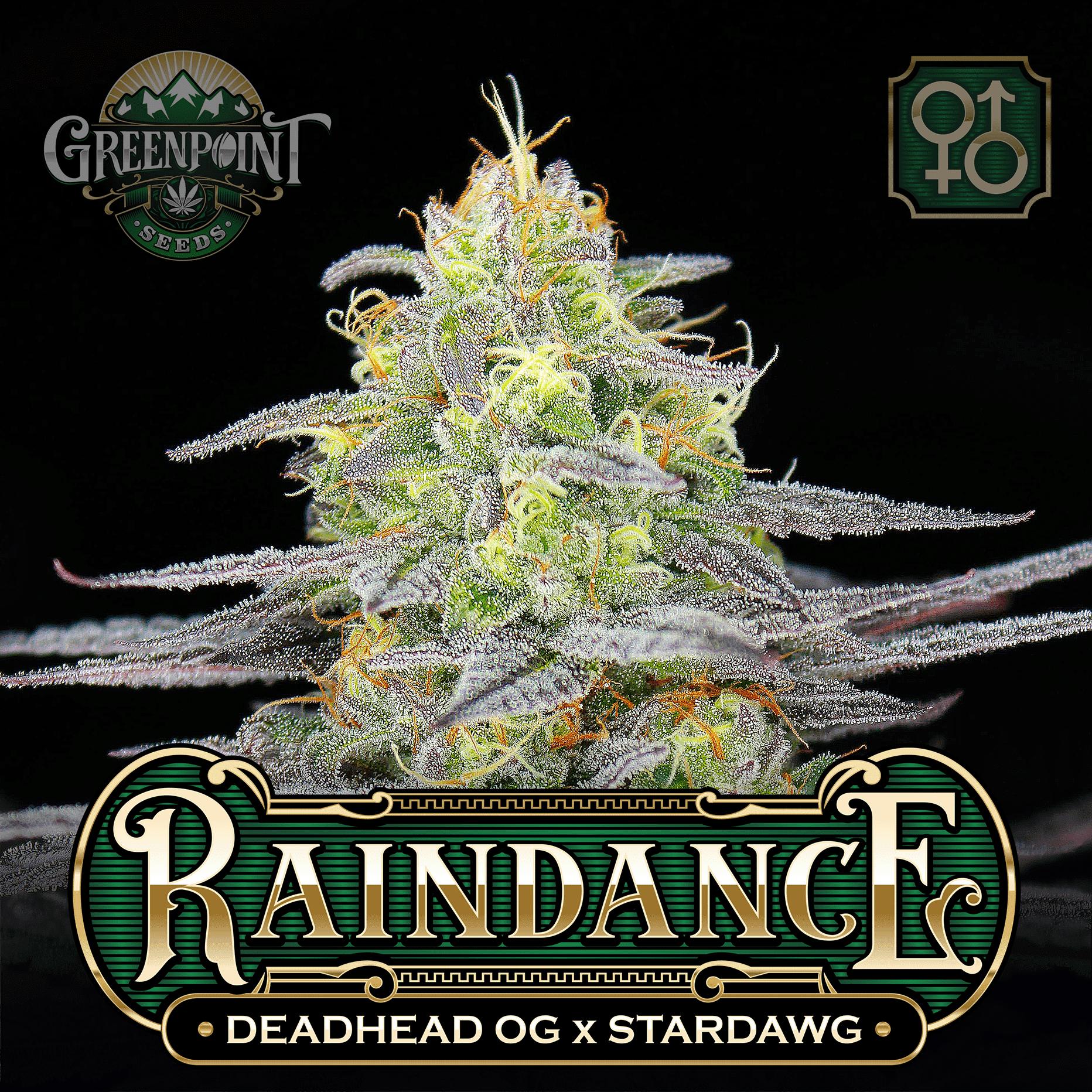 raindance-deadhead-og-stardawg-greenpoint-seeds_1a-c.png